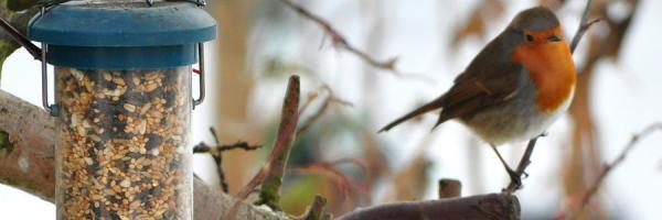 Bird feeder maintenance
