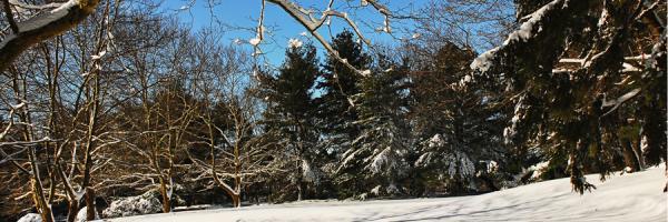 Winter Blog Banner