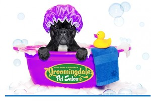 Pamper you Pet at Groomingdales Pet Salon