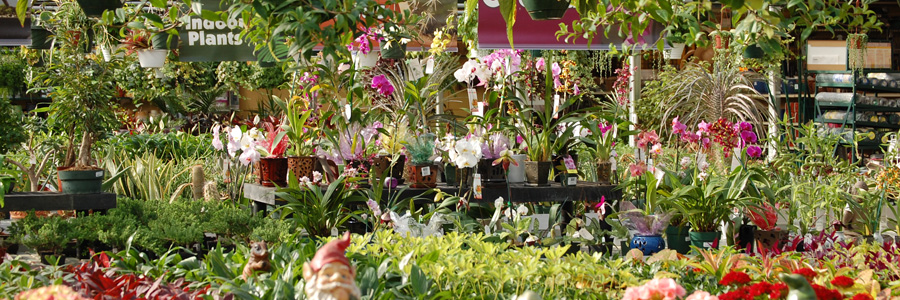 Discover Beautiful Houseplants such as bamboo, ferns, orchids, kalanchoes and more at Alsip Home & Nursery
