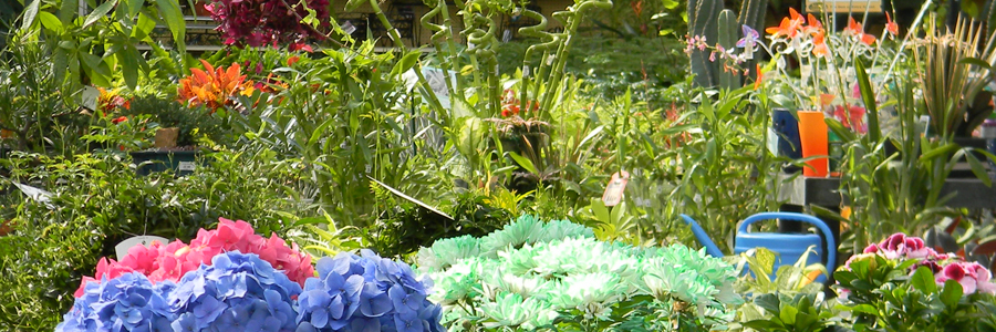 Find Houseplants at Alsip Home & Nursery