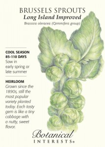 Botanical Interests - Brussel Sprouts - cool season