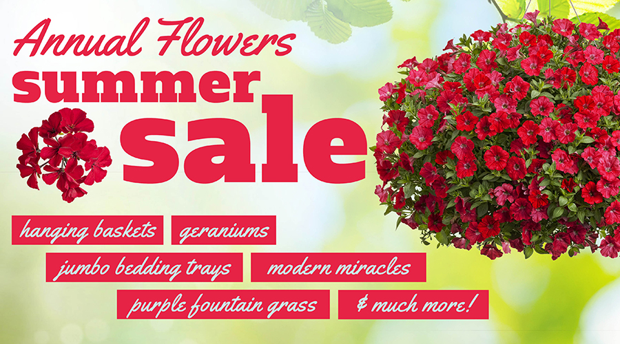 Summer-Sale-Annuals-900x500