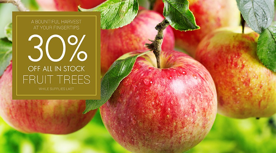 Fruit-Trees-30% Off-web