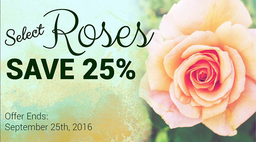 Roses-25-Banner-900x500