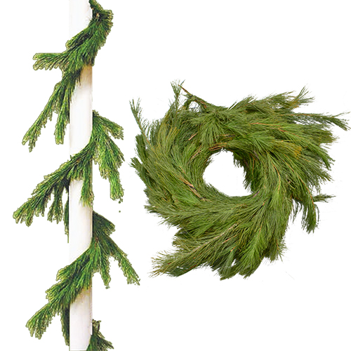 Shop White Pine Garland Roping from Alsip Home & Nursery