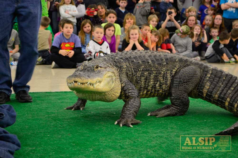 Bubba the Alligator at Alsip Home & Nursery's Pet Open House!