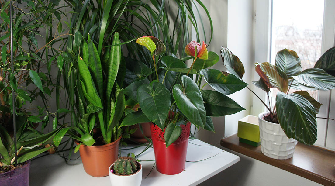 Picking the perfect houseplant alsip home nursery northwest mix of houseplants in the white light room mightylinksfo