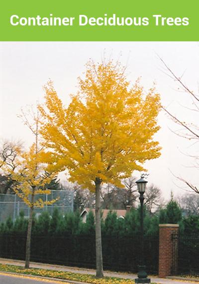 D-Trees-C-Banner