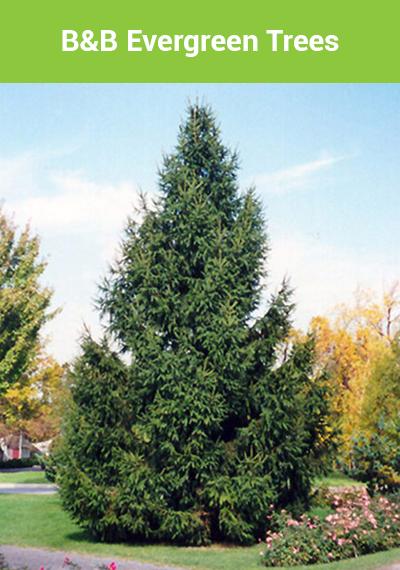E-Trees-Banner