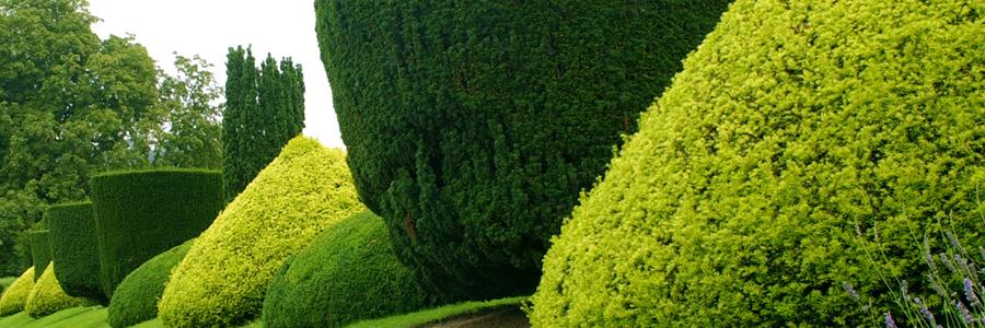 shrub-plants