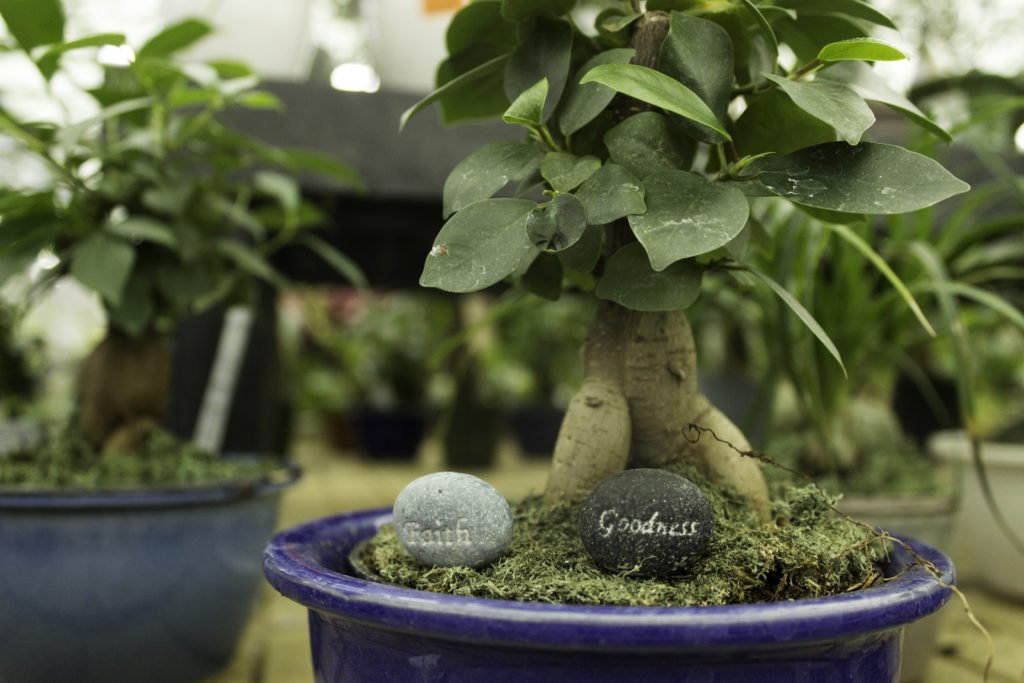 Bonsai Tree Care Alsip Home Nursery