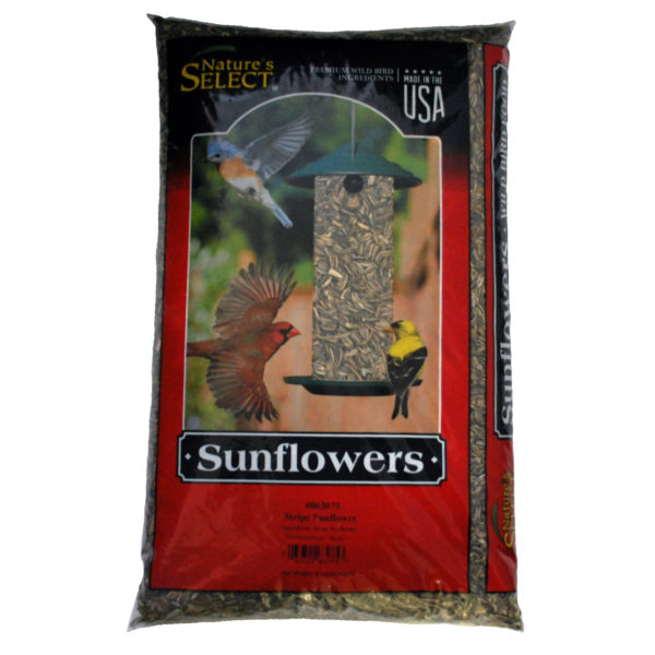 Striped Sunflower Seeds, 8 LB