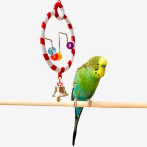 Bird Toys & Perches