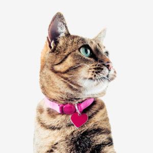 Cat Leashes & Collars