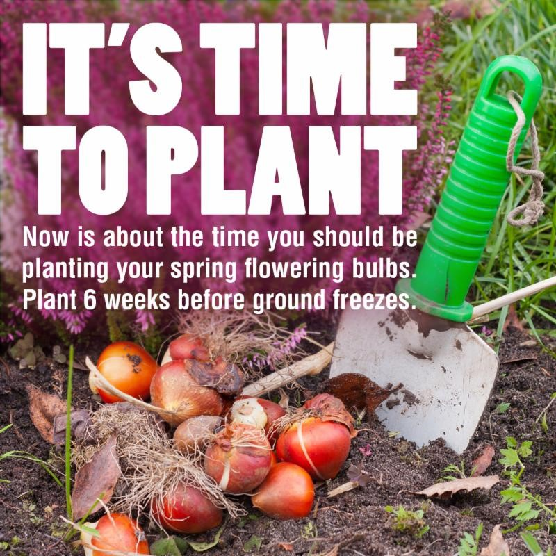 Time to plant your spring blooming bulbs like tulpid, daffodils, alliums, crosus, hyacinth and more!