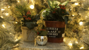 Holiday Gift Plants