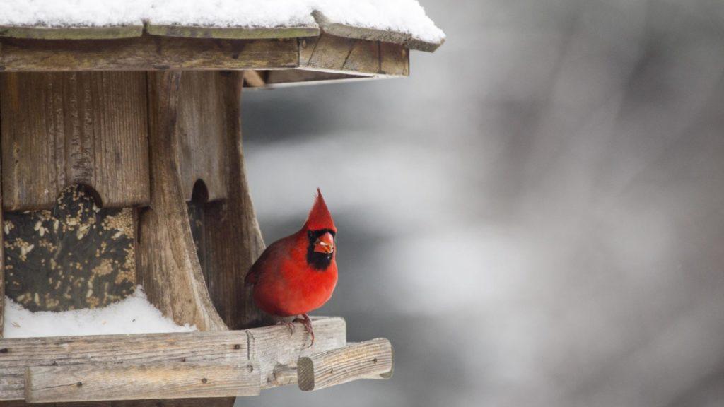 Attract Winter Wild Birds