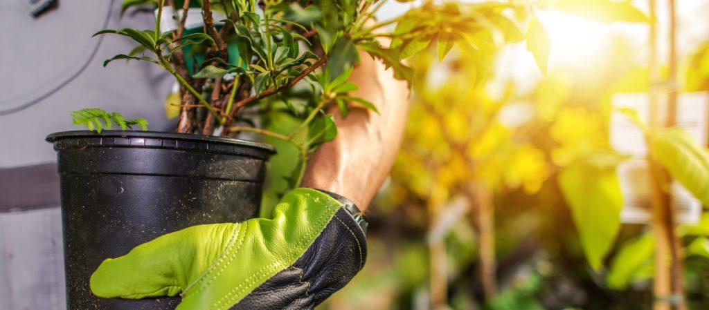 Gardener Planting Garden Plants. Landscaper with Plant.