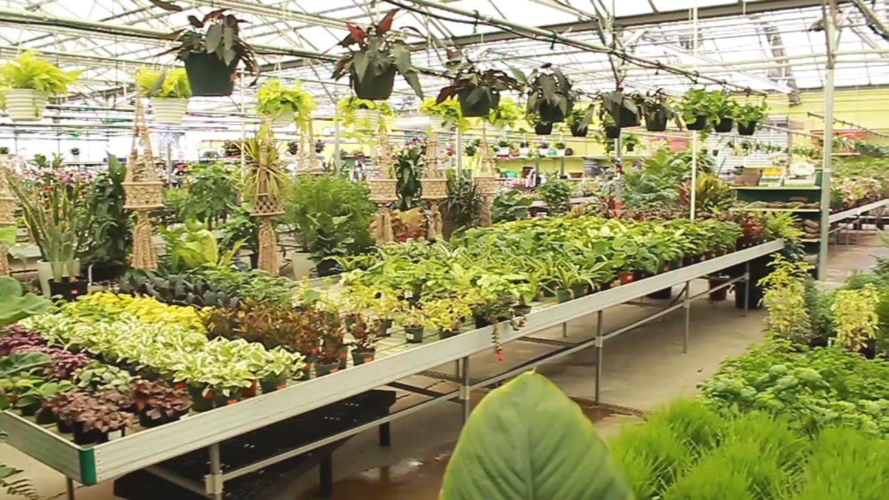 Greenhouse_Houseplants.00_00_00_00.Still001
