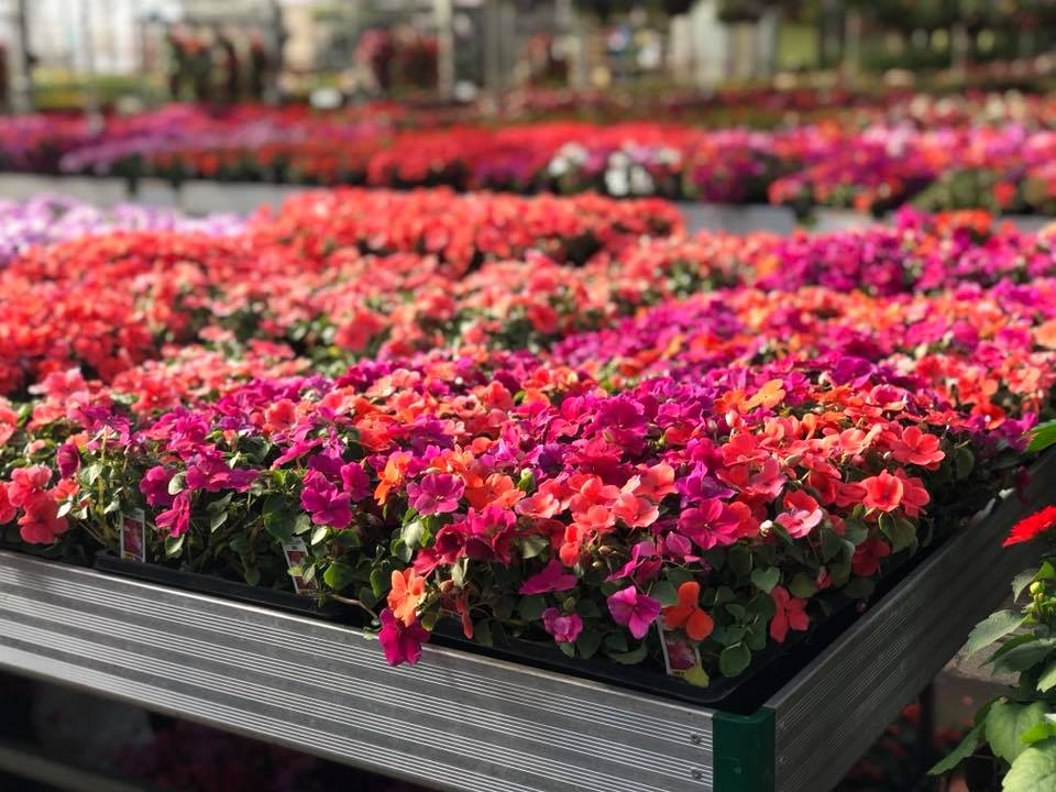 Plants | Alsip Home & Nursery on peppers red, animals red, ornamental grasses red, orchids red, berries red, cactus red, pots red, design red, nature red, mums red, flowers red,