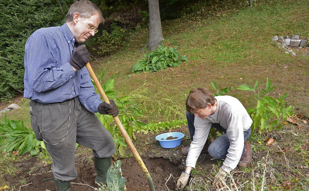 tree planting preparation