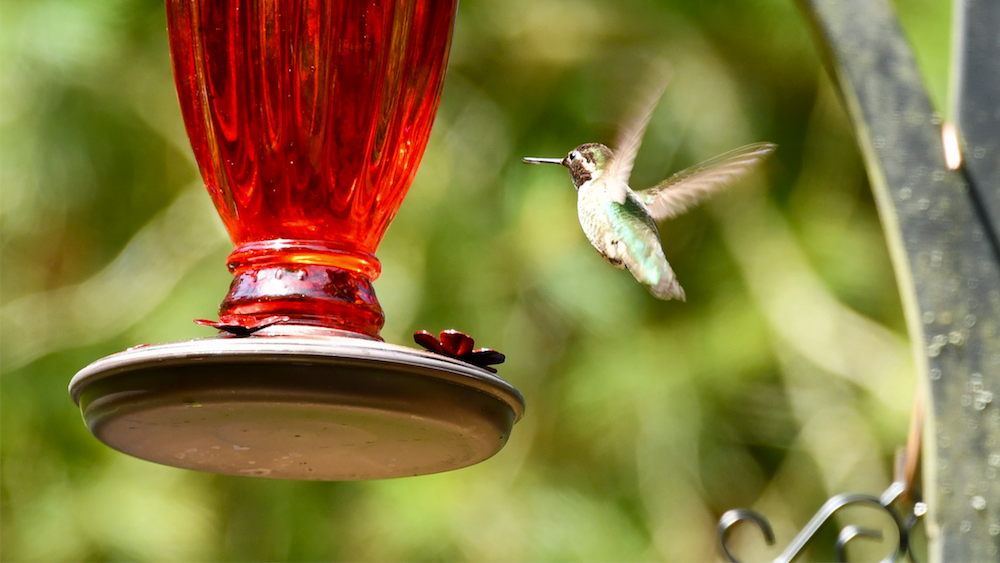 red hummingbird feeder