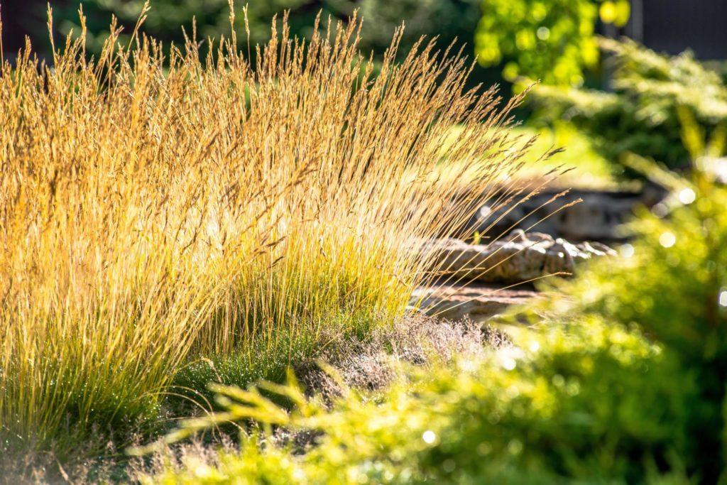 native grass ornamental grasses guide st. john