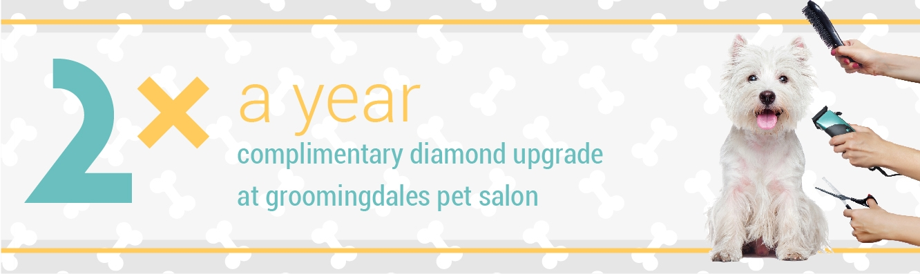Chew Crew Members receive a complimentary Diamond Upgrade at Groomingdales Pet Salon 2x a Year!