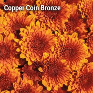 Copper Coin Bronze Garden Mum