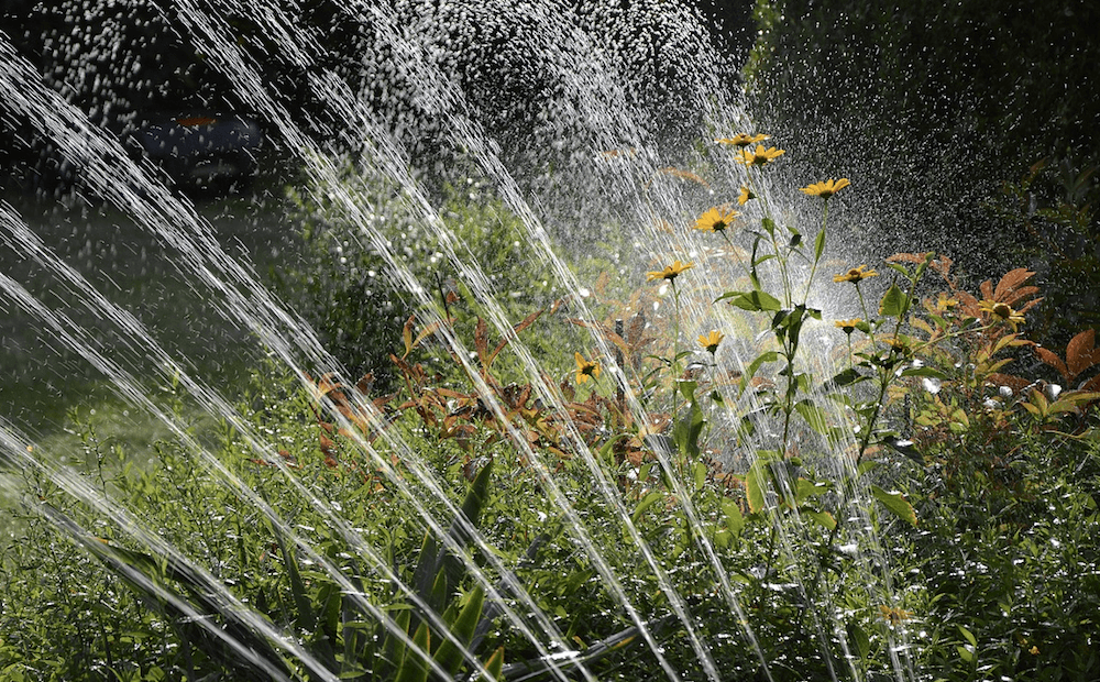 irrigation drought-tolerant plants sprinkler systems st john