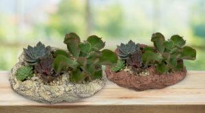 Succulent Rock Garden Workshop