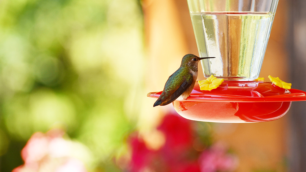 choosing-the-right-feeders-for-attracting-birds-hummingbird-red-feeder
