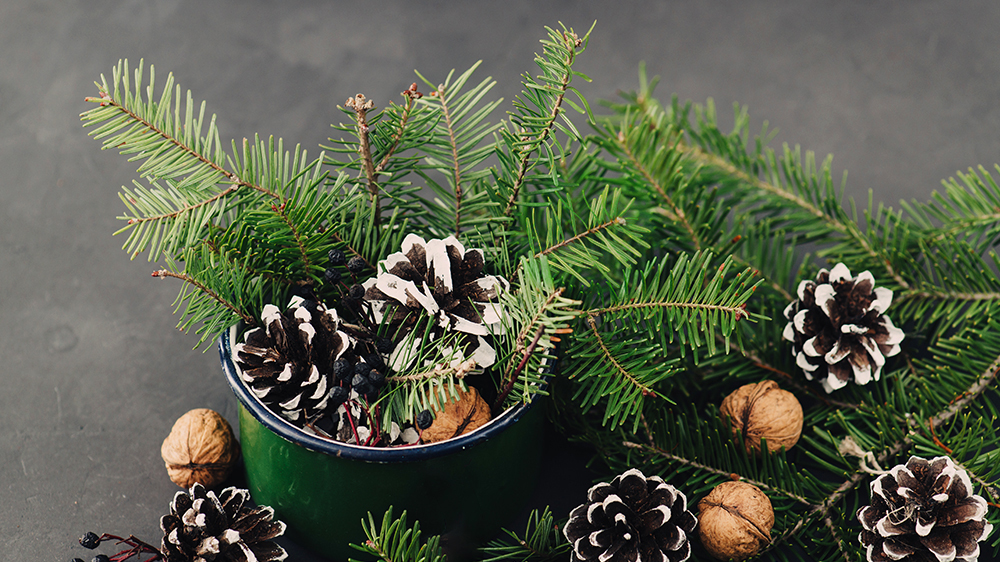fresh-cut-greenery-arrangements-for-the-holidays-can-cup