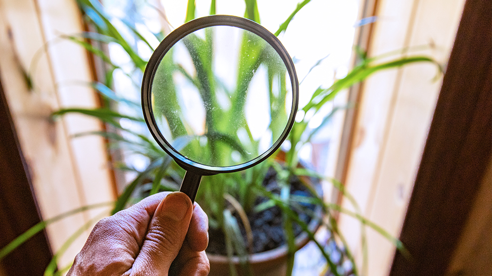 how-to-combat-houseplant-pests-and-diseases-magnifying-glass-houseplant-feature