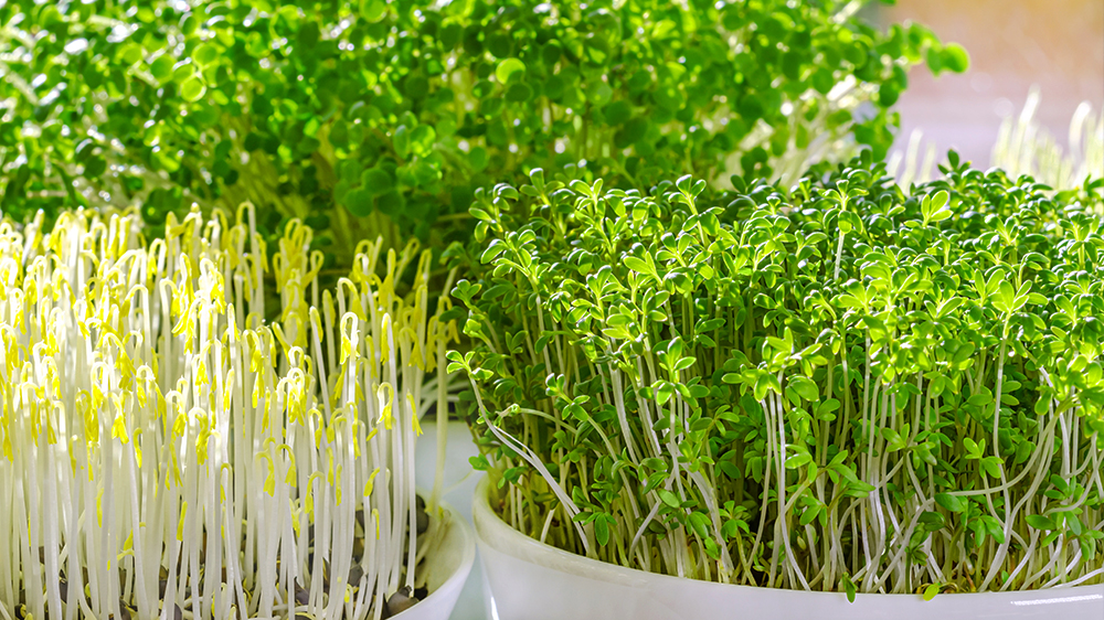 how-to-grow-microgreens-various-microgreens-in-bowl