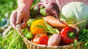 plan-spring-vegetable-garden-basket-of-fresh-vegetables