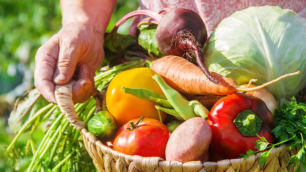 https://www.alsipnursery.com/wp-content/uploads/2020/02/plan-spring-vegetable-garden-basket-of-fresh-vegetables.jpg