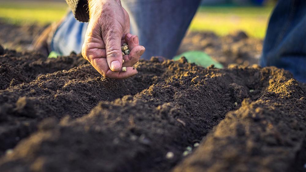 plan-spring-vegetable-garden-lettuce-garden