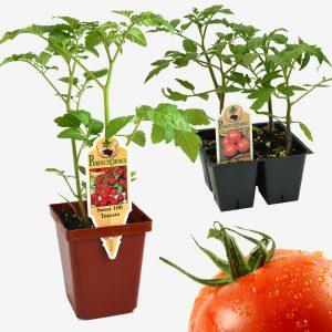 Spring Edible Plants