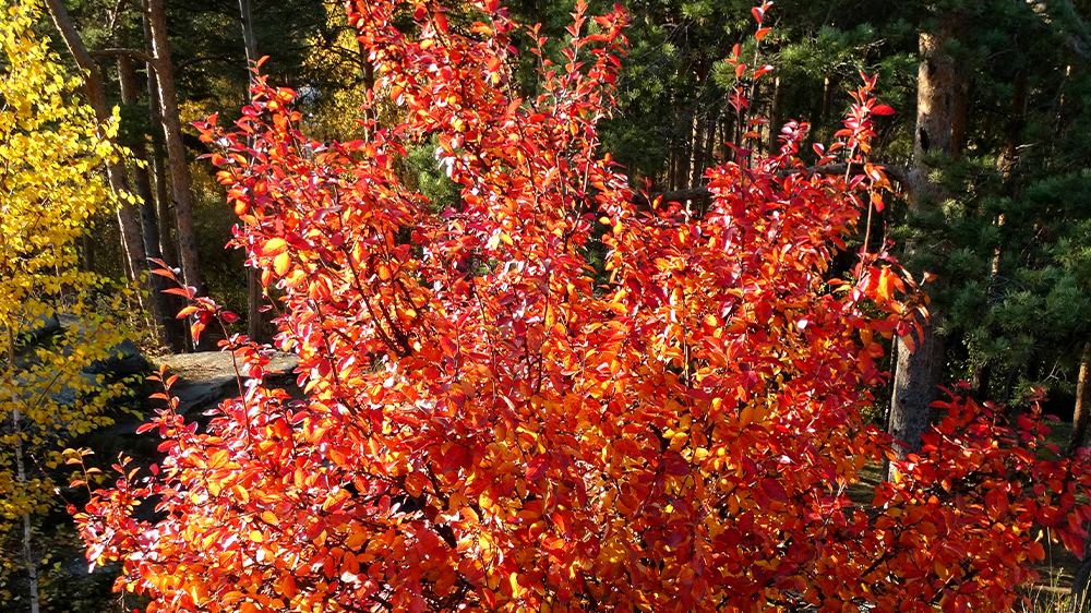 best-trees-to-plant-arbor-earth-day-autumn-serviceberry