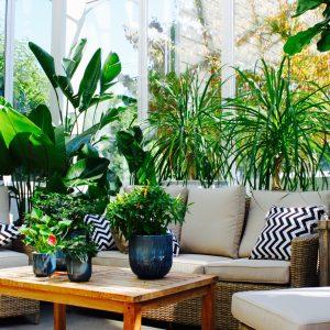 Houseplants & Tropicals