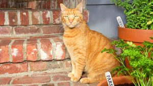alsip-nursery-cat-approved-plants-cat-with-plants-header