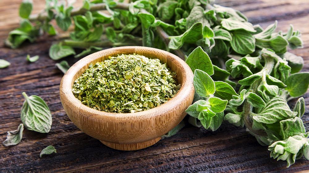 alsip-nursery-homegrown-herbs-oregano