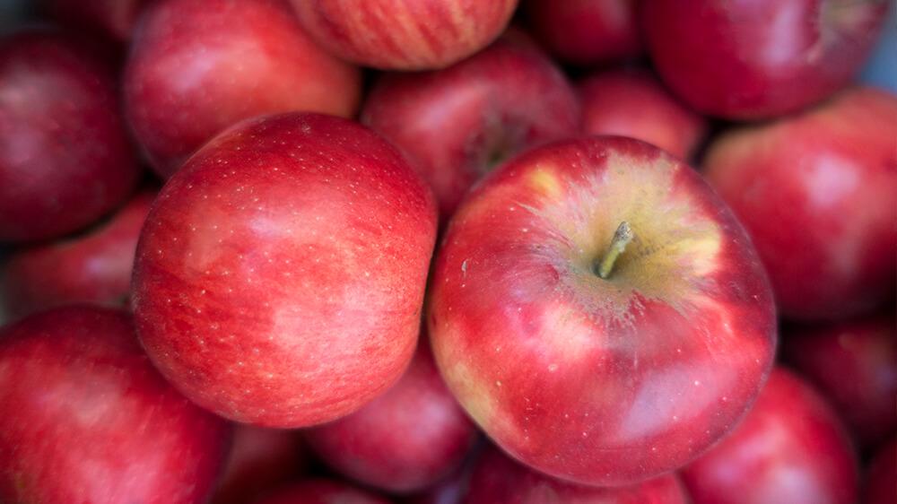 alsip-nursery-best-apple-trees-red-jonathan-apples
