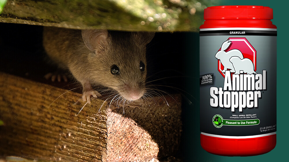 alsip-getting-rid-of-mice-safely-repellent