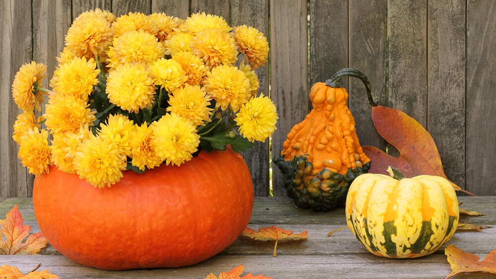 alsip-gourd-geous-fall-displays-pumpkin-planter-chrysanthemums