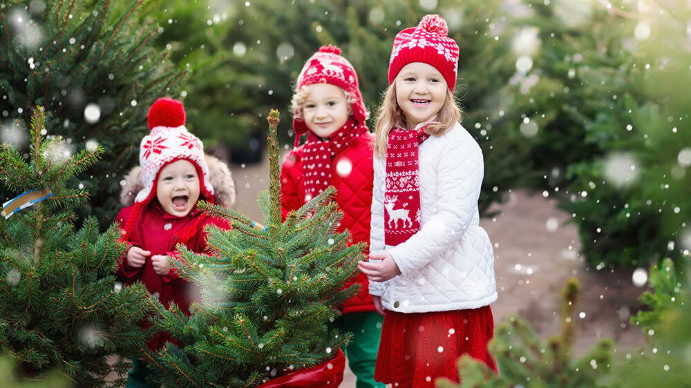 Alsip Real Christmas Tree Care children picking out christmas tree outside
