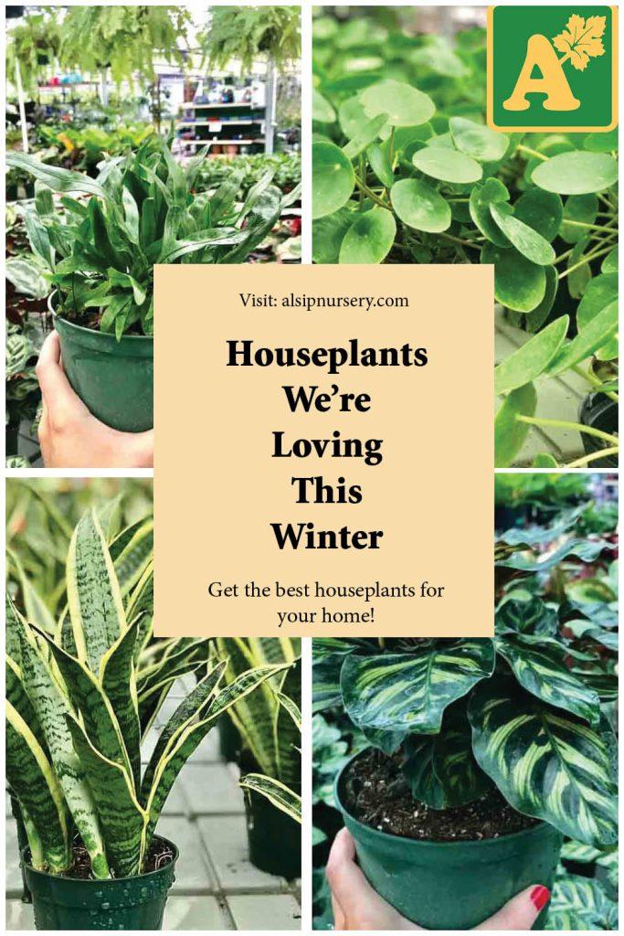 Houseplants We're Loving This Winter