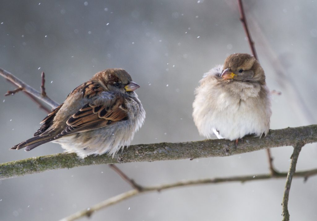 attracting-birds-to-the-winter-sparrows